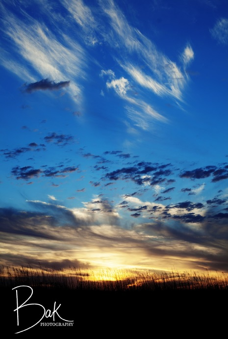 Photograph of blue and yellow sunsetting sky in a field.